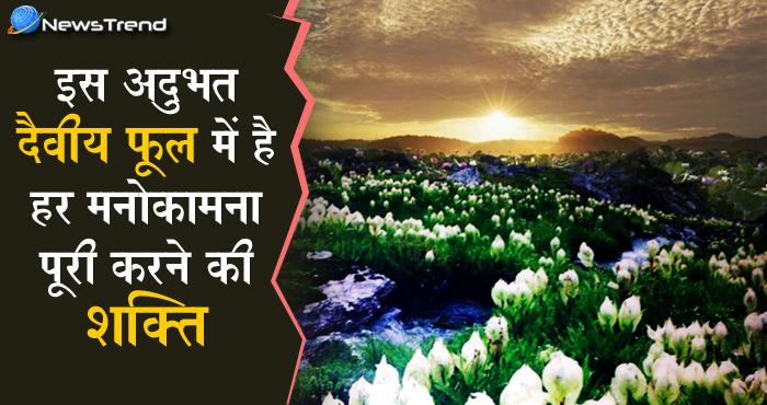 अद्भुत दैवीय फूल 14 साल में एक बार खिलता है हिमालय की गोद में, देखने वाले की होती है हर मनोकामना पूर्ण