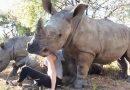 इस महिला की हरकत देख हो जायेंगे हैरान, खतरनाक जानवरों के साथ…
