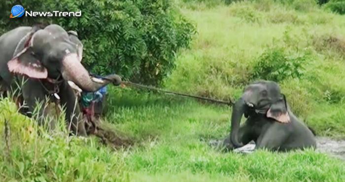 'सच्ची दोस्ती' क्या होती है ये इस हाथी से सीखिए, जान पर खेलकर यूं बचाई साथी की जान – देखें वीडियो