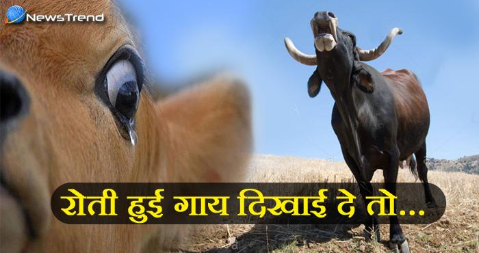 रोती हुई गाय को देखने पर क्या हो सकता है आपके साथ? जानिये गाय से जुड़ी ये बेहद ख़ास बातें