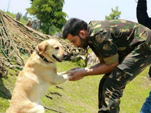 वफादार कुत्तों को इंडियन आर्मी रिटायरमेंट के बाद मार देती है गोली.. ये है वजह