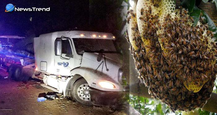 भयानक सड़क हादसे में 10 लाख मधुमक्खियों की मौत, घायलों को भी साबुन का पानी डालकर मार दिया गया