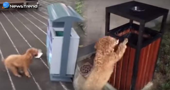 चीन का यह कुत्ता कर रहा मोदी के सपनों को साकार, इधर-उधर गिरा कूड़ा देखकर डाल देता है कूड़ेदान में