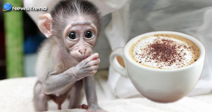 बन्दर के बच्चे ने पर्यटक से छिनकर पी कोल्ड कॉफ़ी, उसके बाद हुआ बुरा हाल कि भेजना पड़ गया अस्पताल