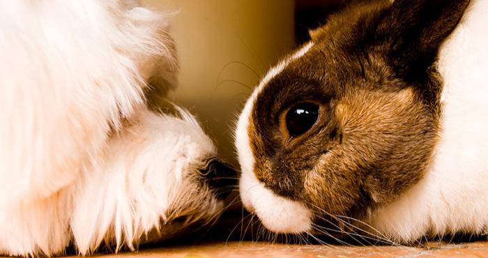 घर में गुडलक लाते हैं पालतू जानवर, जानिए कौन सा शुभ है आपके लिए