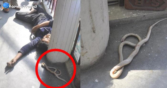 युवक की लाश के पास मिला मरा हुआ सांप, वीडियो से पता चला रहस्यमयी मौत का सच
