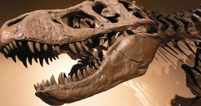 वैज्ञानिकों द्वारा तलाशा गया पृथ्वी के सबसे पुराने स्तनपायी पूर्वज का जीवाश्म, अब उठेगा पर्दा