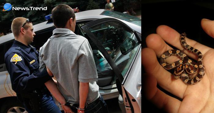 नशे में धुत्त युवक को पुलिस ने गिरफ्तार कर जब ली पैंट के जेब की तलाशी तो निकला यह खतरनाक जीव