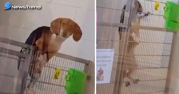 यह मासूम पपी अनोखे अंदाज में भाग रहा था शेल्टर होम से,भागने की वजह अभी बनी है राज..देखें वीडियो