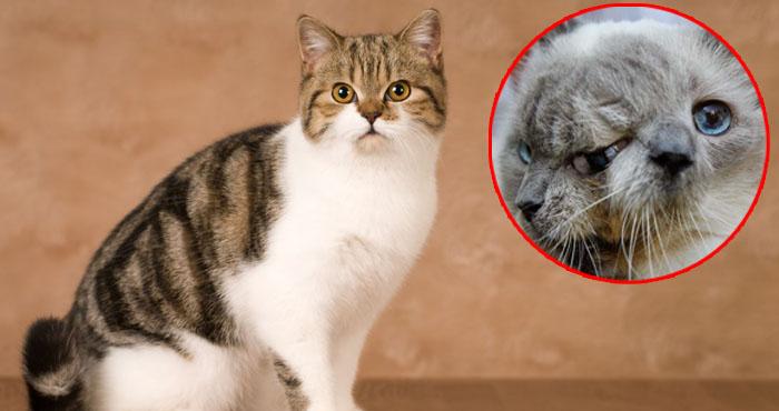 यकीन मानिये नहीं देखी होगी आपने दो मुँह, तीन आँख और दो नाक वाली अद्भुत बिल्ली, देखें