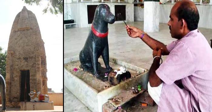 भारत का ऐसा अनोखा मंदिर जहाँ राम जी या हनुमान जी की नहीं बल्कि होती है कुत्तों की पूजा, जानें