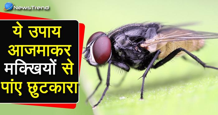 ये है आसान घरेलु उपाय जो मक्खियों से तुरंत राहत दिलाए, ज़रूर अपनाएँ और शेयर करें