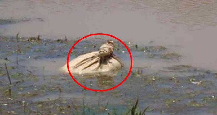 नदी में तैर रहा था एक थैला, जब खोल कर देखा गया तो सभी भोचक्के रह गये