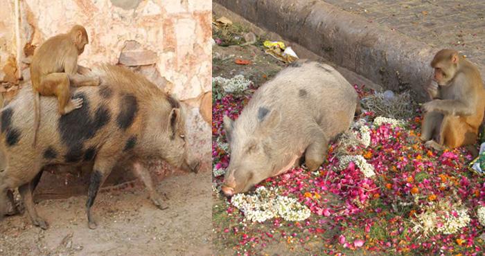 इन दोनों जानवरों की अद्भुत दोस्ती देखकर आप के आँखों में आंसू आ जाएंगे