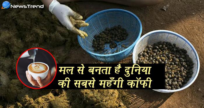 मल से तैयार होने वाली दुनिया की सबसे महँगी कॉफ़ी कोई और नहीं बल्कि भारत बेचता है, जानें