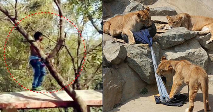 7 खूंखार शेरों के सामने कूद गया ये शख्स, फिर सामने आया रुह कंपा देने वाला मंज़र – देखिए वीडियो