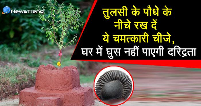 तुलसी के पवित्र पौधे के नीचे रखें यह एक चमत्कारी चीज, हमेशा घर से दरिद्रता रहेगी दूर