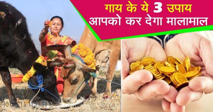 आज से ही शुरू कर दें गाय के ये 3 चमत्कारी उपाय, दूर होने लगेगी आर्थिक तंगी