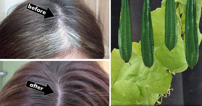 इस सब्जी को खाएंगे और लगाएंगे तो सफेद बाल हो जाएंगे काले, आजमाकर देखिए