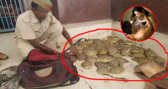 सेक्स पावर बढ़ाने के काम आ रहे हैं भारत के इस प्रजाति के कछुए, कई गुना बढ़ जाती है मर्दानगी