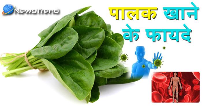 पालक के फायदे । पालक खाने के फायदे I पालक के औषधीय गुण I हरी सब्जिया