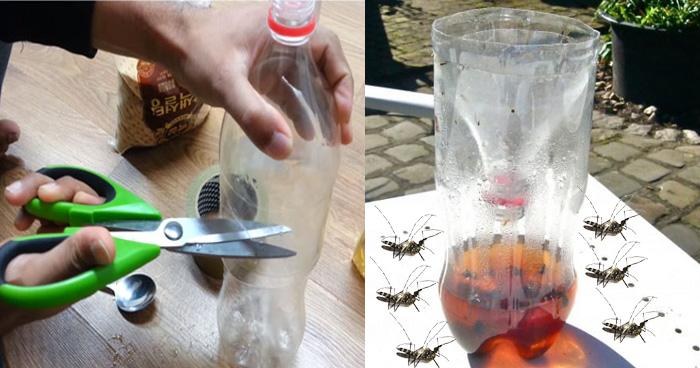 घर बैठे बनाएं मच्छर भगाने वाली मशीन, सिर्फ चाहिए कोल्डड्रिंक की एक खाली बोतल