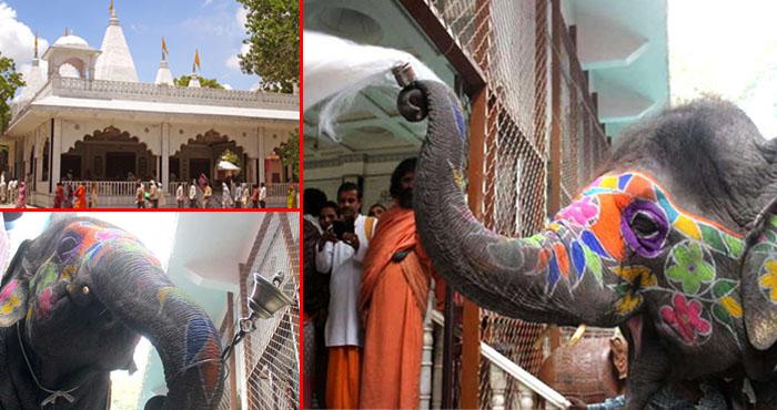इस मंदिर में हर रोज भगवान की आरती करती है यह हथिनी,मुस्लिम महावत को भी हो गया है भगवान से प्रेम
