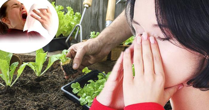 घर-आंगन में उगाएं ये पौधे और पाएं असाध्य बीमारियों से छुटकारा