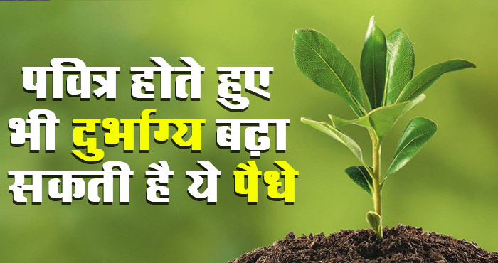 अगर आपके घर में भी लगे हुए हैं ये पौधे तो हो सकता है आपको नुकसान, आज ही हटायें