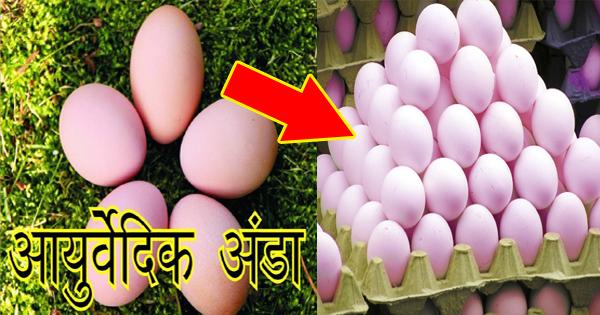 मार्केट में आ गया 'आयुर्वेदिक अंडा', फायदे सुनकर रह जाएंगे दंग