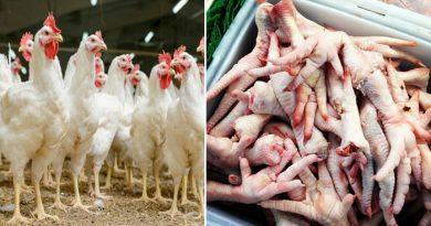 मुर्गे की टांग खाना है पसंद? लेकिन 99% लोग नहीं जानते होंगे ये बात, पढ़ लिजिए वर्ना पछताएंगे