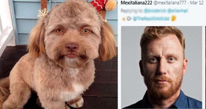 इंसानी चेहरे वाला कुत्ता