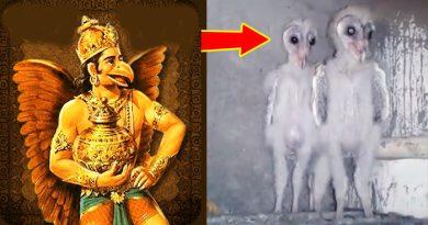 जिंदा है 'भगवान राम' को बचाने वाले 'गरुड़ के वंशज', यह वीडियो वाकई में आपको हैरान कर देगा – देखिए