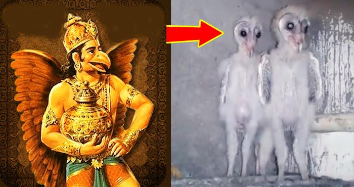 Photo of जिंदा है 'भगवान राम' को बचाने वाले 'गरुड़ के वंशज', यह वीडियो वाकई में आपको हैरान कर देगा –