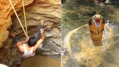 किंग कोबरा को बचाने के लिए कुंए में कूदा युवक, फिर क्या हुआ.. देखिए वीडियो