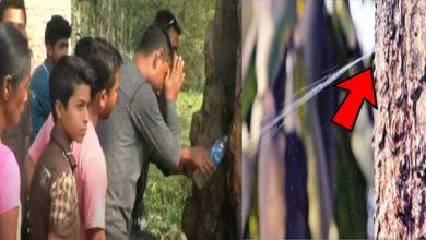 नवरात्र में हुआ चमत्कार, पेड़ से निकल रही है पानी की धारा, वीडियो देख आप भी दंग रह जाएंगे