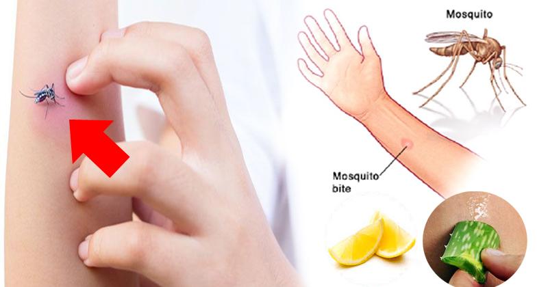 मच्छर काटने पर होने वाली खुजली से पाएं चुटकियों में छुटकारा