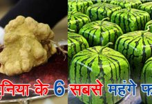 महंगे फल, ऐसे फल के बारे में जिसके एक टुकड़े की क़ीमत है एक करोड़ रुपए