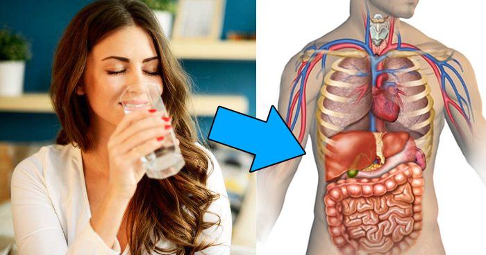 Image result for अगर आप भी सुबह उठकर खाली पेट एक गिलास पानी पीते हैं
