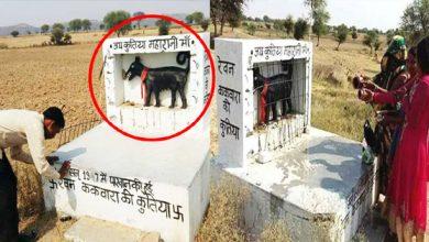 Photo of UP के इस गांव में हैं कुतिया देवी का मंदिर, लोग करते हैं पूजा जानिए इस मंदिर की पूरी कहानी