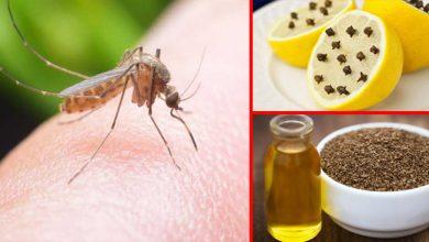 Photo of ये है मच्छरों से बचने के आसान उपाय, अब मच्छर आपके घर घुसने से भी डरेंगे!