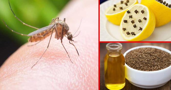 मच्छर से बचने के उपाय, मच्छरों से छुटकारा पाने का कुछ आसान घरेलू नुस्खें