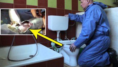 टॉयलेट की पाइप में फँसा था बच्ची का शव, टॉयलेट को साफ़ करने के लिए बुलाया प्लंबर
