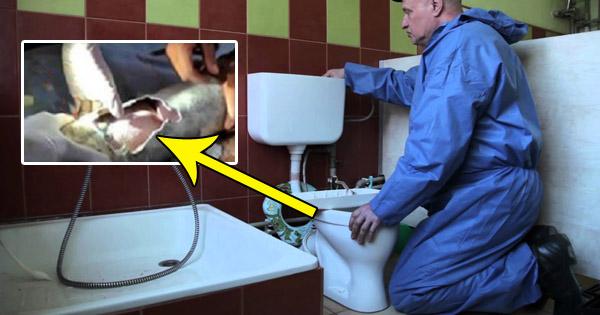 जाम टॉयलेट को ठीक करने के लिए बुलाया था प्लंबर, जब पाइप खुली तो नज़ारा देखकर उड़ गए सबके होश