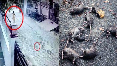 Photo of हर रोज़ घर के बाहर मिलते थे मरे हुए चूहे, CCTV फुटेज देखी तो सामने आया होश उड़ाने वाला नज़ारा