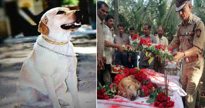 रिटायरमेंट के बाद भारतीय सेना वफादार कुत्तो को मारती है गोली, वजह जानकर करेंगे सलाम