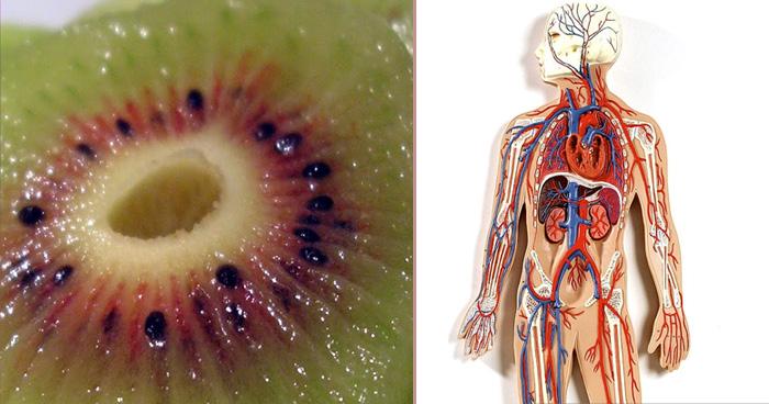 इस फल के सेवन से मिलती है गजब की शक्ति, इसके फायदे जानकर हो जायेंगें हैरान