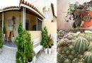 भूलकर भी घर में ना लगाएँ ये पौधे, इन पौधों को घर में लगाने से होती है धनहानि और…..