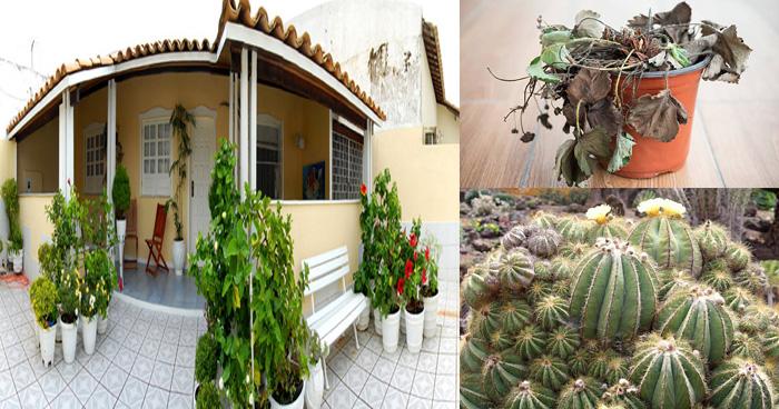 Photo of भूलकर भी घर में ना लगाएँ ये पौधे, इन पौधों को घर में लगाने से होती है धनहानि और…..