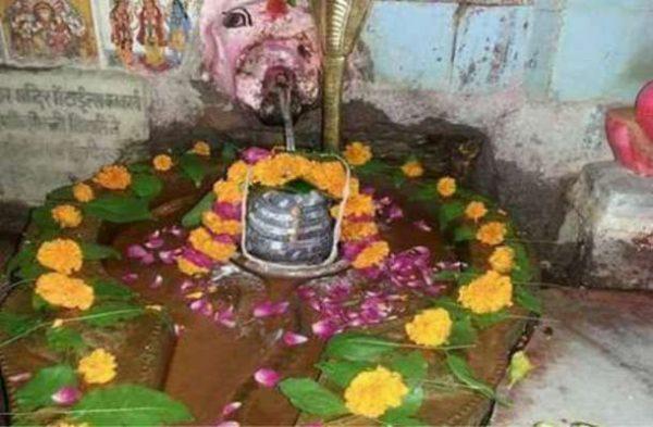इस अद्भुत मंदिर में शिवलिंग का जलाभिषेक करती है गाय, श्रद्धालुओं की मनोकामना होती है पूरी
